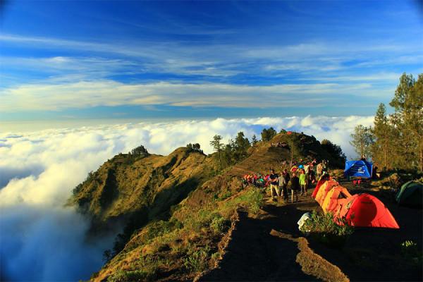 Pepohonan cemara di ketinggian 2.000 – 3.000 meter dpl Gunung Rinjani