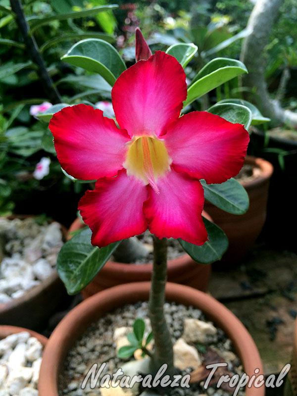 Naturaleza tropical 6 plantas que crecen a pleno sol sin for Cuales son las plantas ornamentales y sus nombres