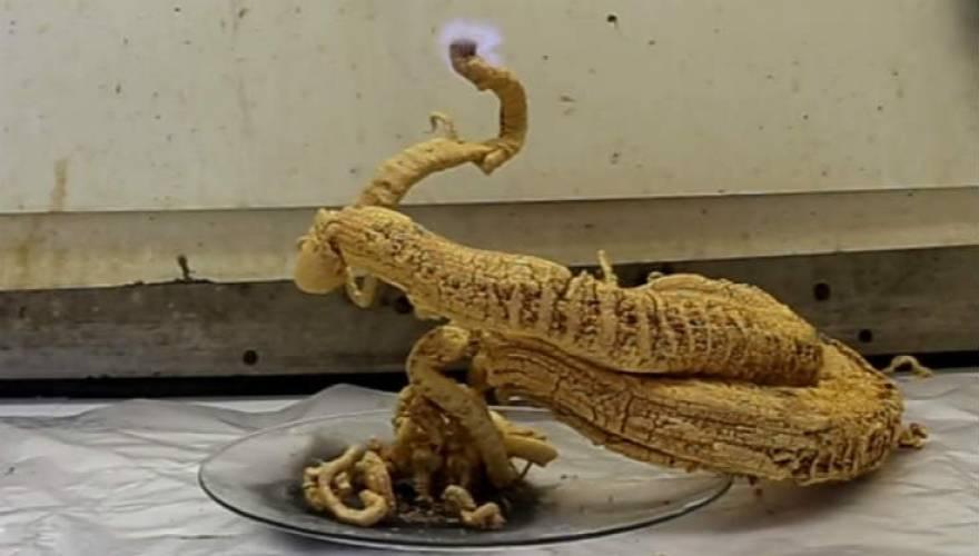 «Το Φίδι του Φαραώ»: Μία περίεργη χημική αντίδραση! (Βίντεο)