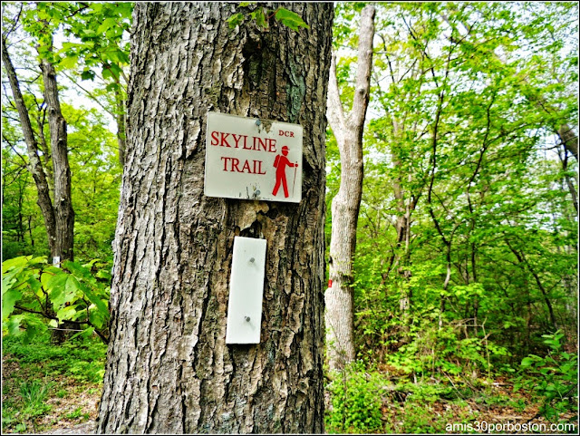 Middlesex Fells Reservation: Skyline Trail