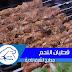 قطبان اللحم مع طريقة التتبيل الصحية