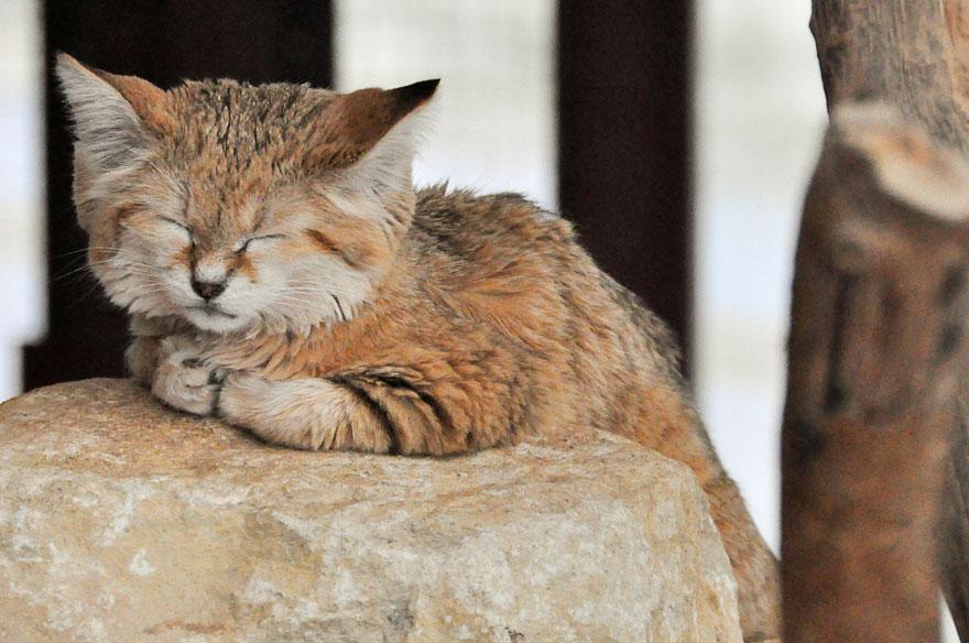 sand-cats-kittens-forever-2