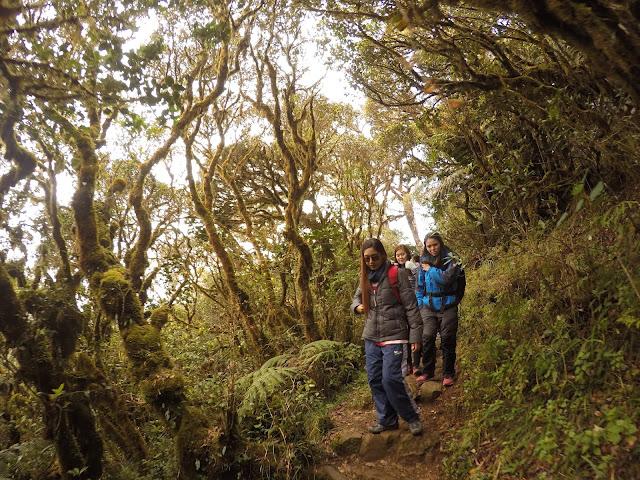 Rizza Salas x Mt. Pulag Ambangeg Trail