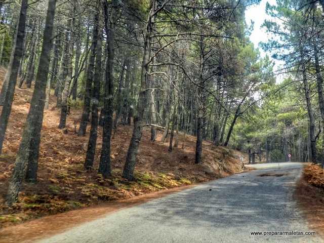 carretera desde El Tiemblo al castañar