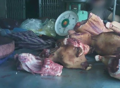 Harrowing footage shows bleeding and rotting animals still on sale at wet markets