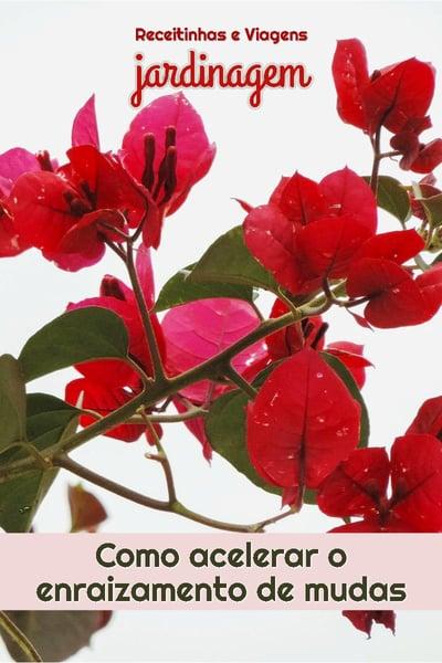 Como fazer mudas de plantas pegarem rapido, enraizamento com vitamina B1