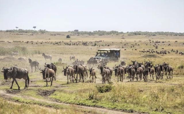 Masai Mara National Reserve, Kenya: The Complete Guide