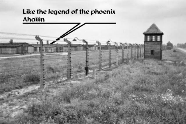 Like the legend of the phenix