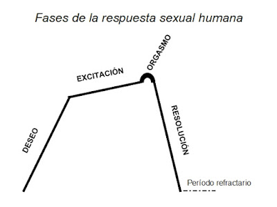 Fases respuesta sexual