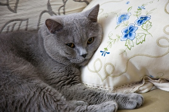 Cara mengetahui kucing sakit tanpa ke dokter