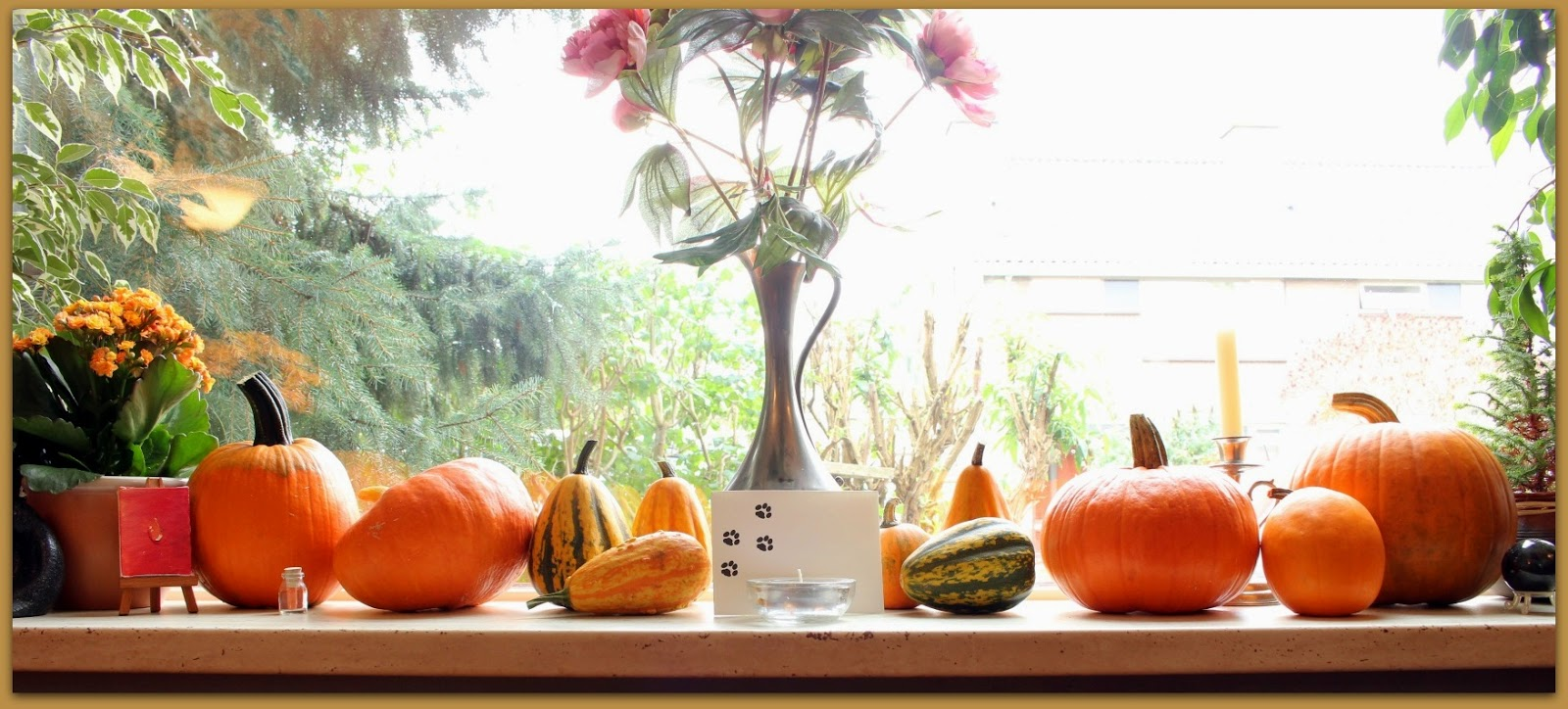 selfgrown pumkins in our windowsill