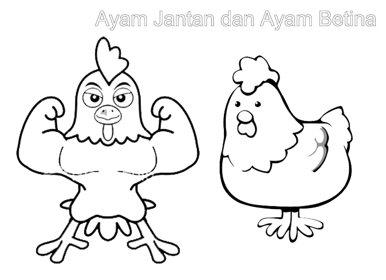 Mewarnai Gambar Binatang Iqbalnana