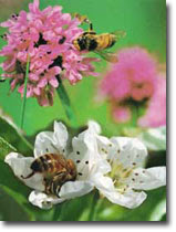 THE MIRACLE OF FEMALE HONEY BEE in holy Quran