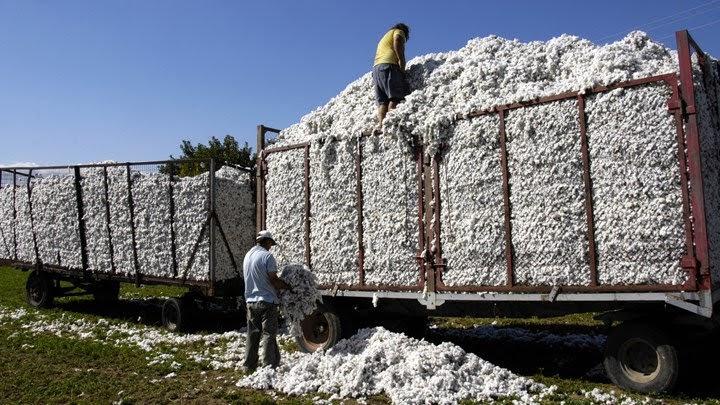 ΕΟΑΣΝΛ: Σύσκεψη στον Πλατύκαμπο για την τιμή του βαμβακιού