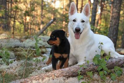 Perro grande y cachorro felices en el bosque.