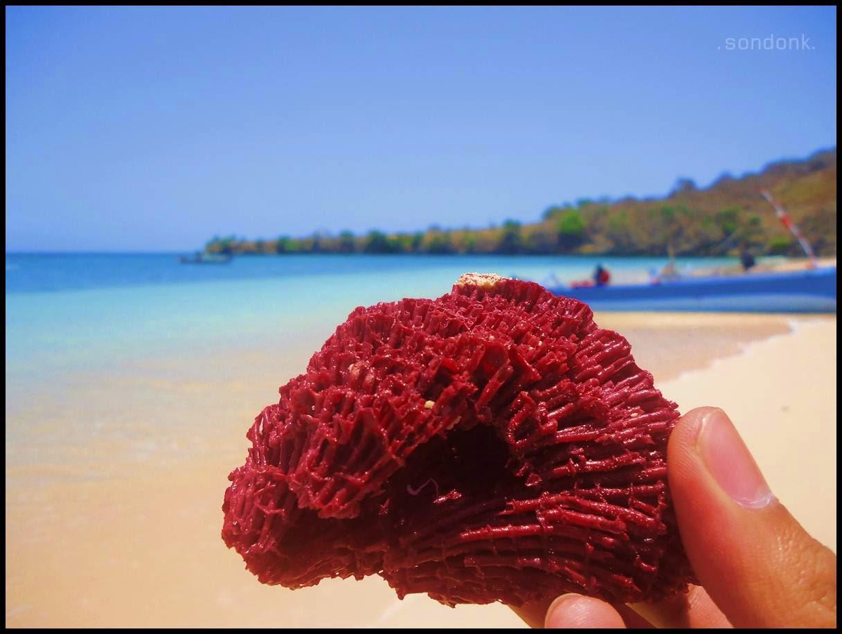 Welcome to Indonesia Blog: Tangsi Beach / Pink Beach Lombok