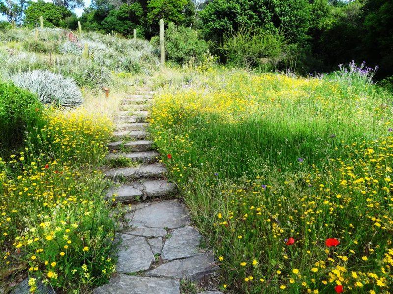 Jardín de Chile en jardin des mediterranees en Domaine du Rayol