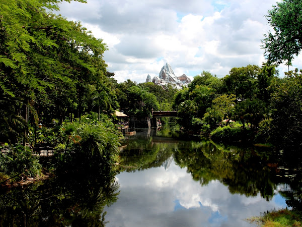 WDW: Animal Kingdom