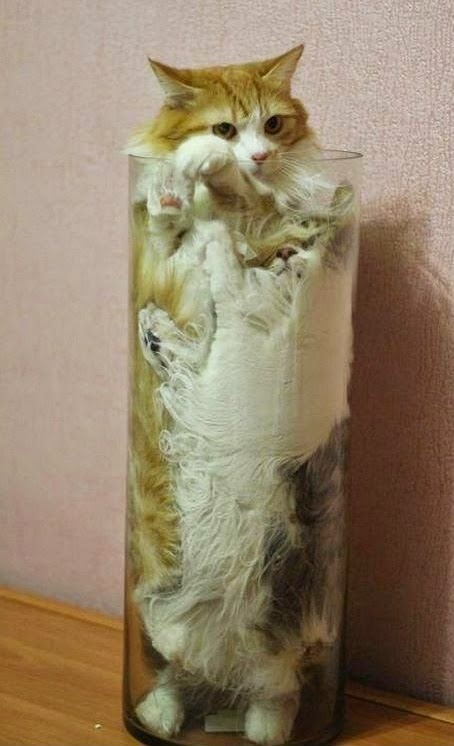 Funny Two Cats in a vase joke picture