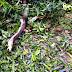 উত্তর 24 পরগনা বারাসত ঘূর্ণিঝড় আম্ফান দ্বারা বিধ্বস্ত | North 24 Parganas Barasat devastated by cyclone Amphan