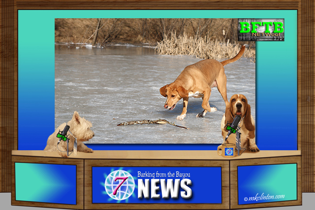 BFTB NETWoof News story: two dogs fall in frozen pond