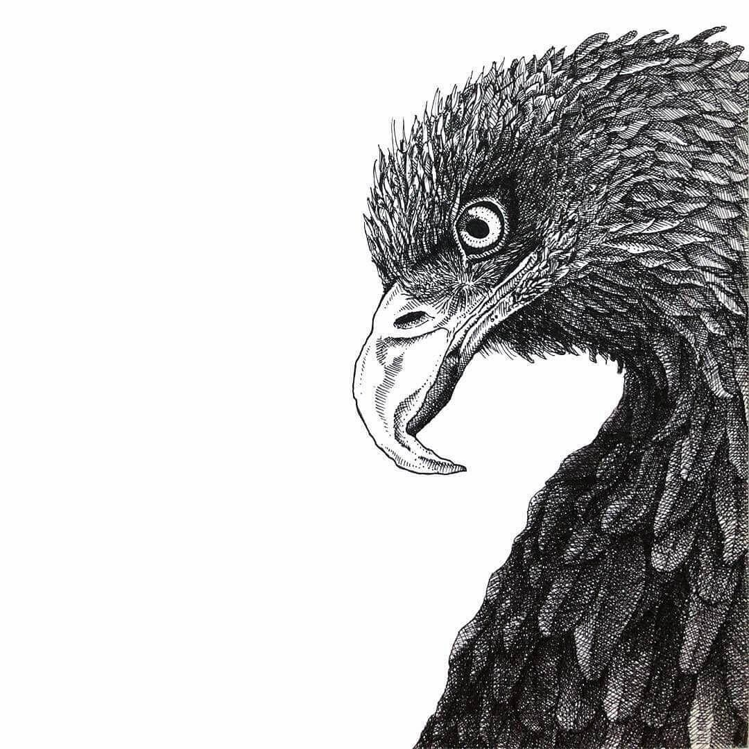 09-Eagle-Gaspar-Animal-Stippling-and-Cross-Hatching-B&W-Drawings-www-designstack-co