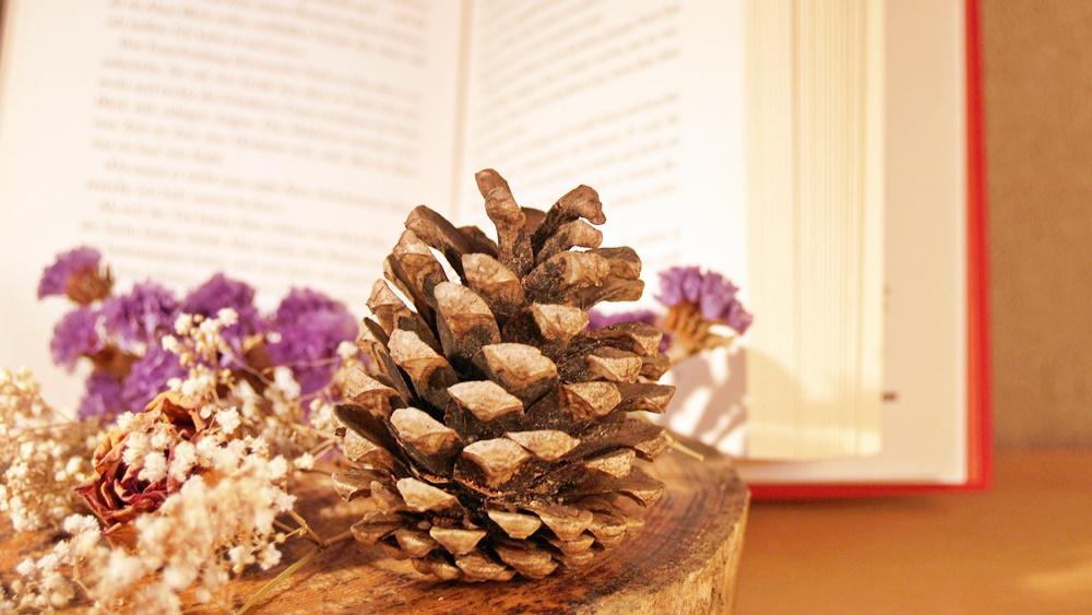 Zapfen und Blumen vor einem Buch