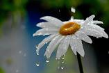 Sabes que podemos estremecer al rocío con un golpe de amor... ¡Y caerá de las flores tan dulcemente!