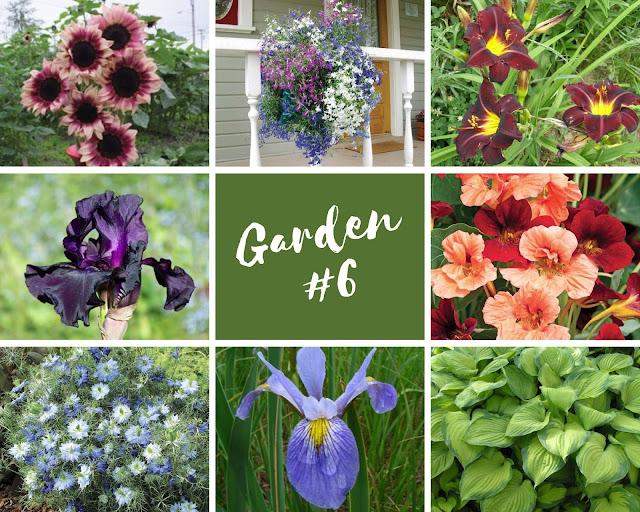 Rock-n-Zen Garden Plot #6 plants identification.