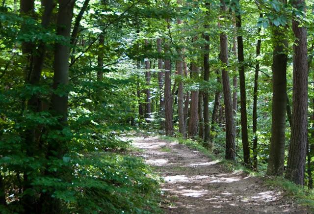 Neuenahrer Wald