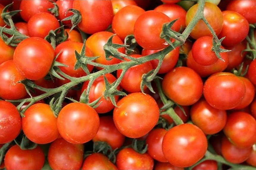Benih Bibit Tomat Cherry Mix Garden Sawahlunto