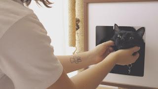 Tu gato odia en secreto cuando le maullas
