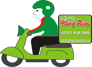 Delivery kambing guling
