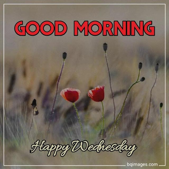 good morning wednesday message