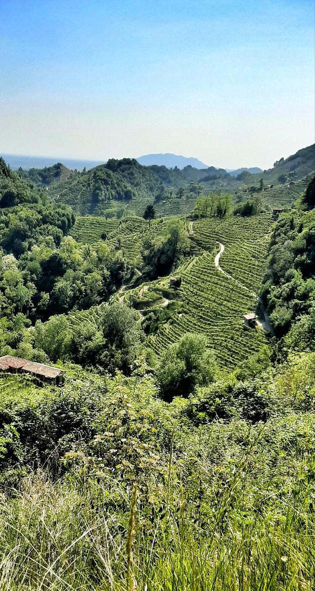 escursioni sentieri colline del prosecco valdobbiadene