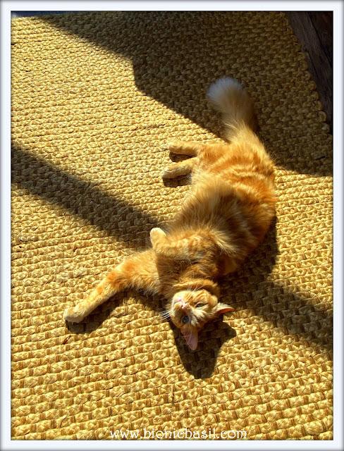 Fudge on Mancat Monday at BBHQ ©BionicBasil® 11-5-20