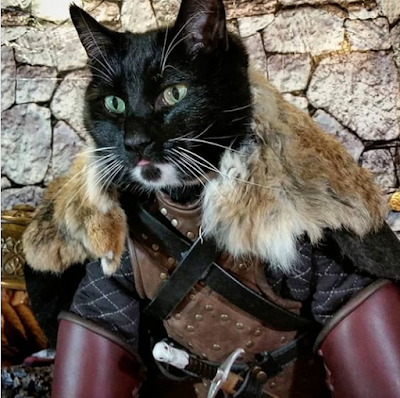 Cat Names Inspired By The HBO Series Game Of Thrones