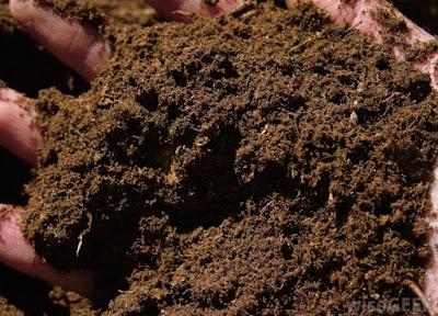 Peat moss làm phân hữu cơ
