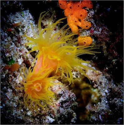 Imágenes mundo marino:flora y fauna marina