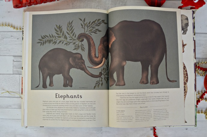 Christmas Gift Guide for a Four year old - Animalium