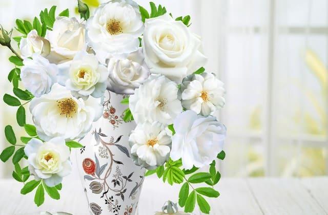 Mawar putih sangat mudah untuk ditanam, bahkan oleh yang belum pernah menanam sama sekali