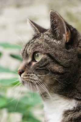 Cara menurunkan berat badan kucing dengan jadwal sehat