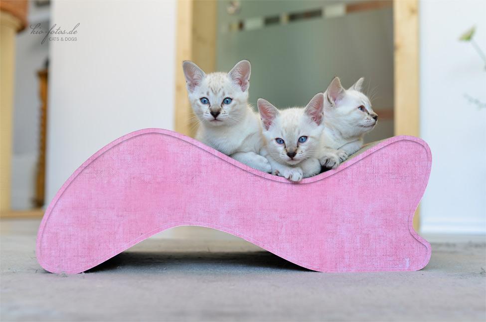 design kratzb ume und m bel f r katzen. Black Bedroom Furniture Sets. Home Design Ideas
