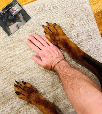 cane morto di tiziano ferro
