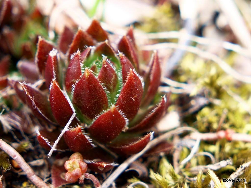 Rosin Cerate: The science behind Skyrim ingredients
