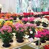 Mengenal Lebih Dalam Jenis Tanaman Hias Bunga dan Ciri-Cirinya