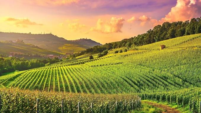 Пьемонт и Портофино: идеальное итальянское сочетание