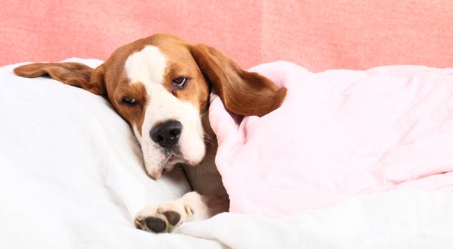 Czy psy śnią?