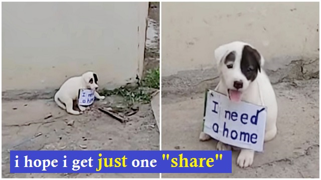 Help! Vulnerable Puppy Alone On Vacant Street And Dragged A Sign Around His Little Neck