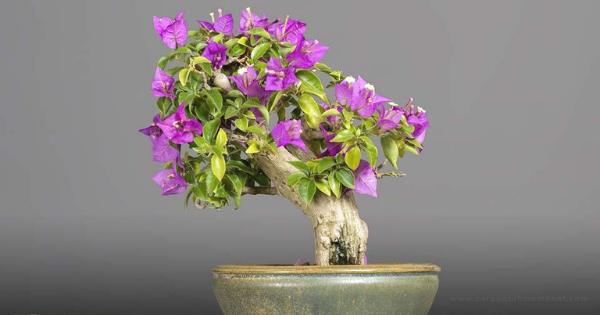Bonsai Bunga